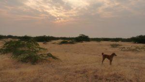 Désrt salé du Little Rann of Kutch, Gujarat
