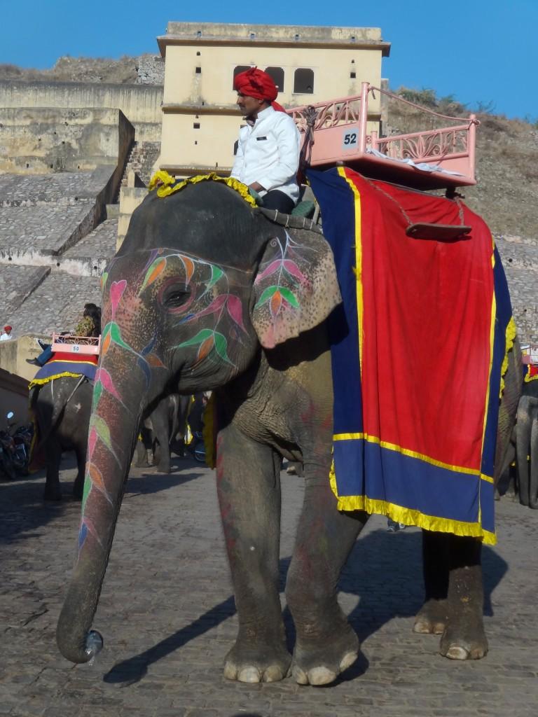 Elephant et son mahut au pieds du Fort d'Amber au Rajasthan