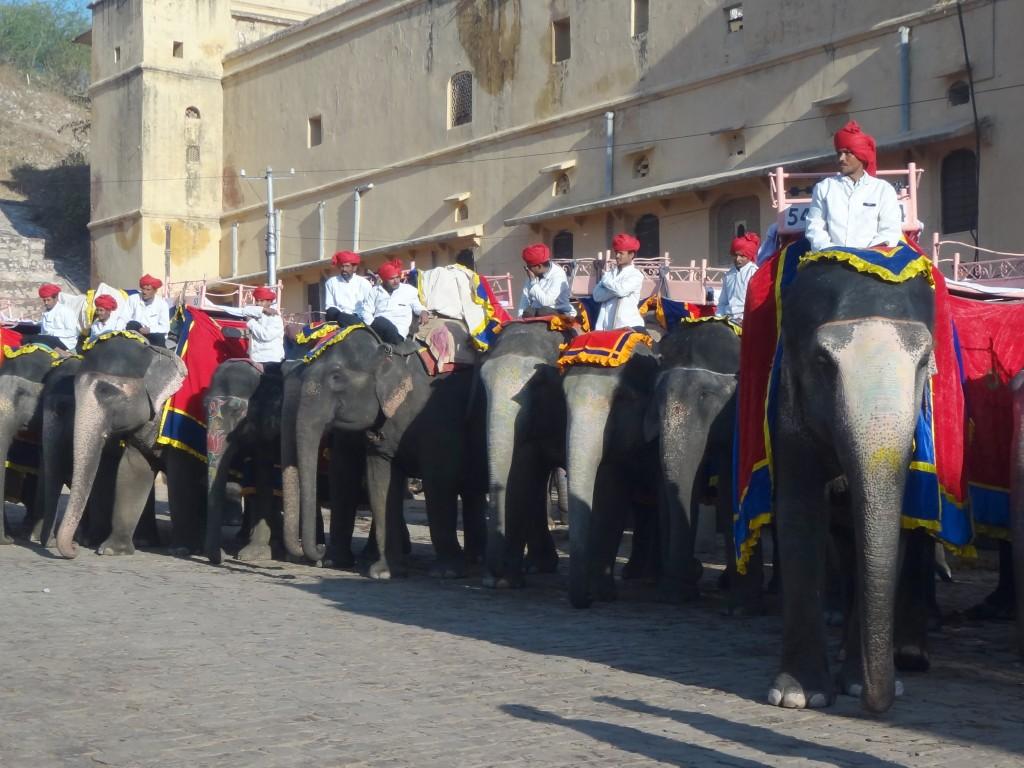 Les éléphants attendent les voyageurs pour la grande montée au Fort d'Amber