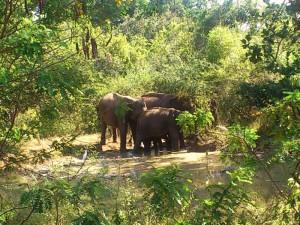 L'éléphanteau protégé