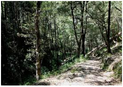 Roads of Shimla