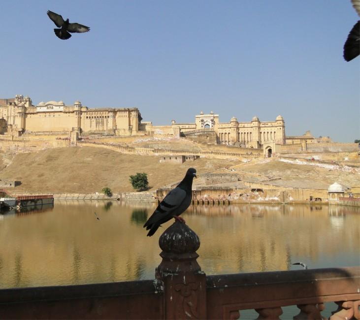 Fort d'Amber Jaipur
