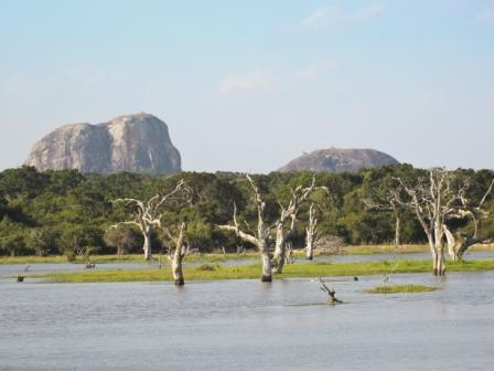 Sri Lanka_Yala national park_Elephant rock