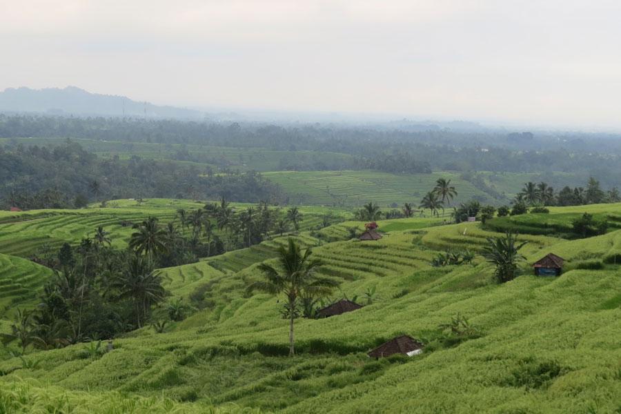 balade à vélo en plein cœur des rizières de Jatiluwih