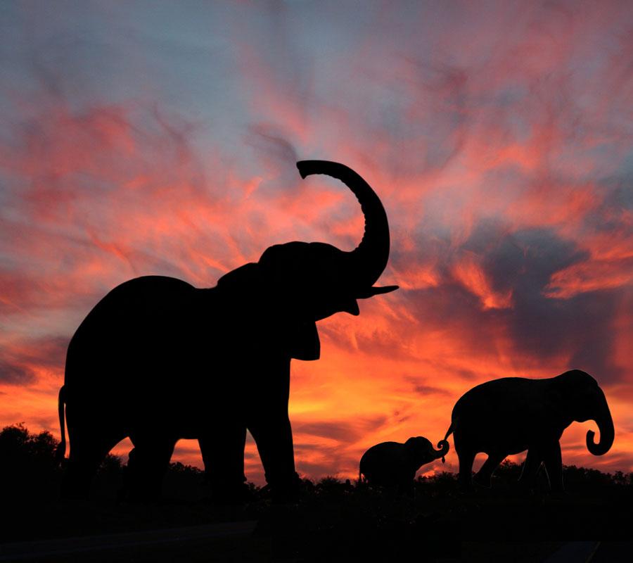 Éléphant en Asie