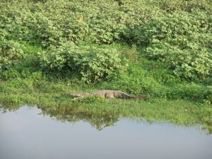 minneriya national park wildlife