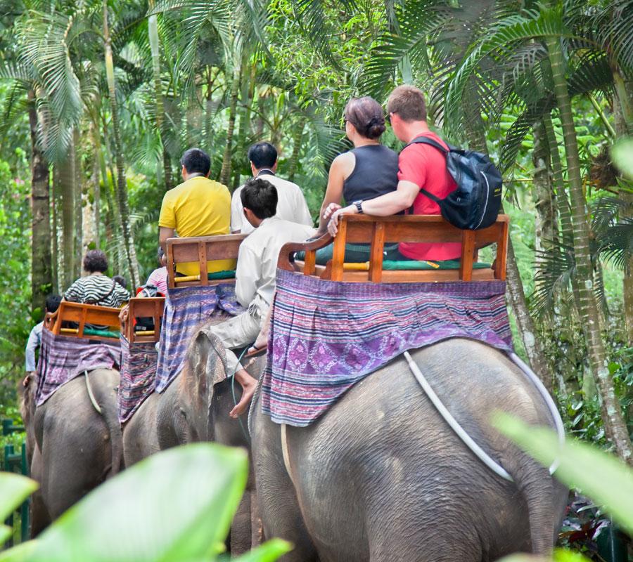 safari éléphant