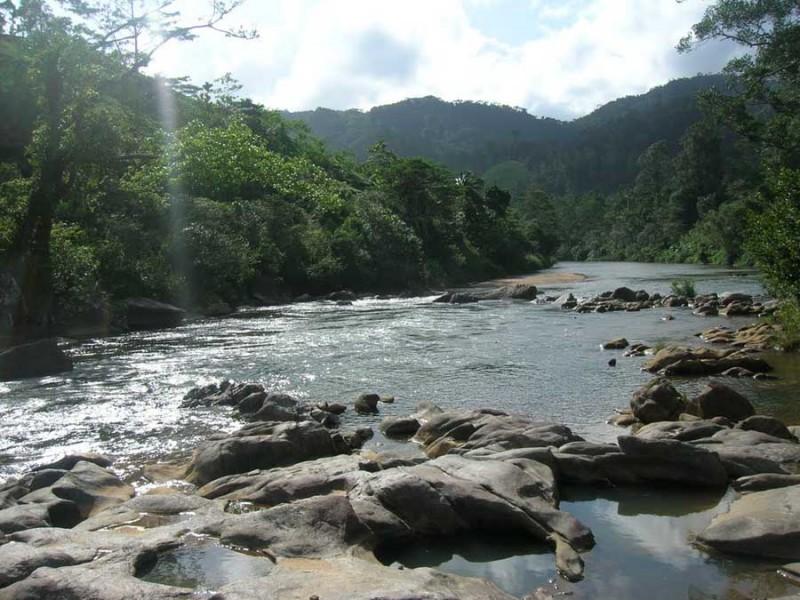 Kleiner Fluss im Regenwald