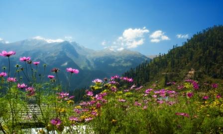 Bhutan_Mountain_Flowers