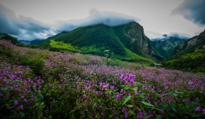 La Vallée des fleurs en Himalaya