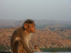singe-a-hanuman-temple-hampi