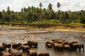 Manada de elefantes tomando un baño refrescante