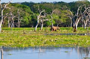 Elefante refrescándose en un lago