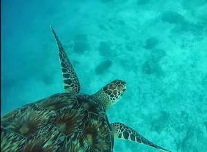 tortue aux îles gili