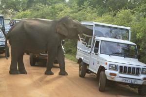 Elefante buscando comida en un jeep