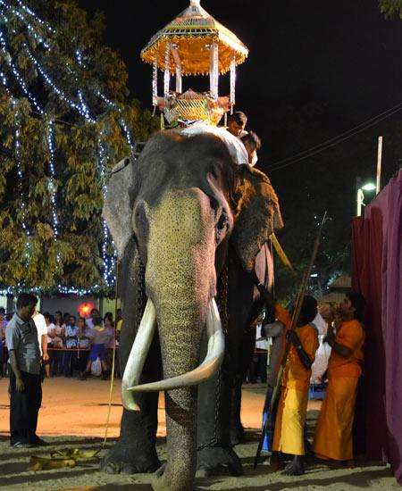 Préparation de l'éléphant sacré