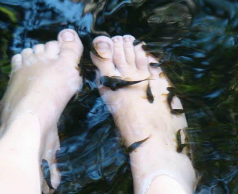 Fish massage dans la forêt