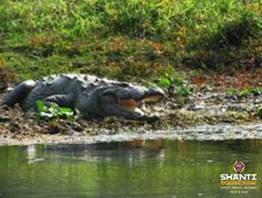 Crocodile-du-parc-de-Chitwan
