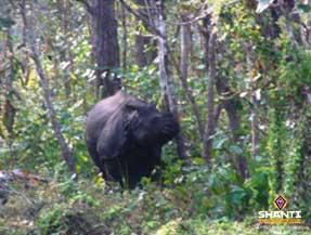 Rhinocéros-à-tête-unicorne