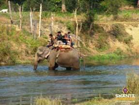 Safari-à-dos-d'éléphant-dans-le-parc-de-Chitwan