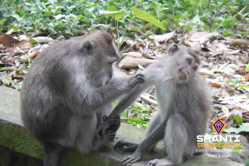 Forêt aux singes Ubud