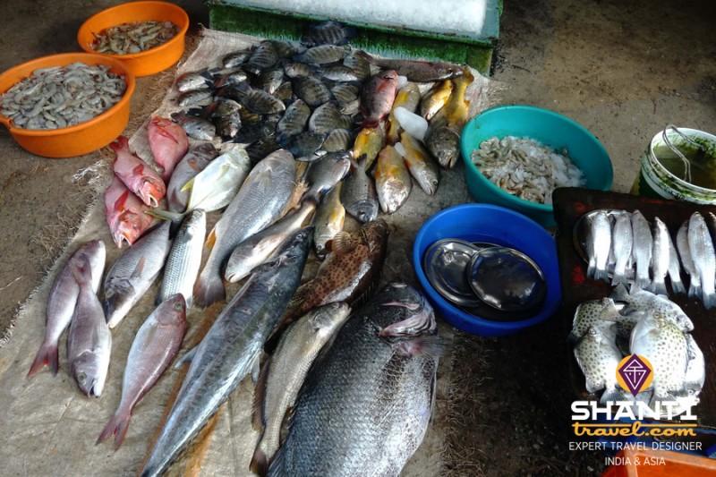 Marché de poissons à Fort Kochi