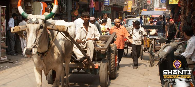 Vache Old Delhi