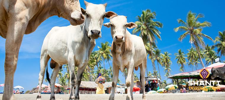 10 bonnes raisons de voyager  Goa