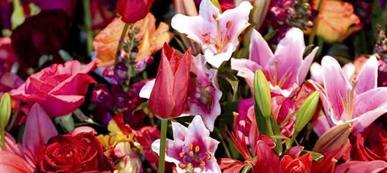 Sikkim International flower festival