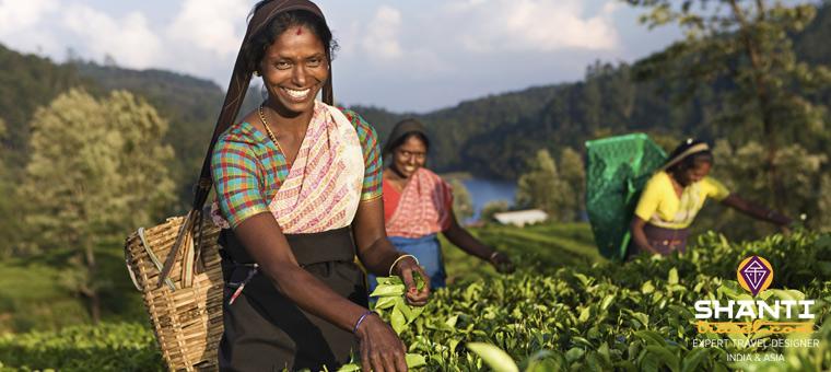 Plantation Sri Lanka