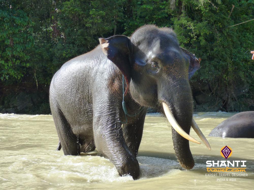Bain avec un éléphant Tangkahan Sumatra