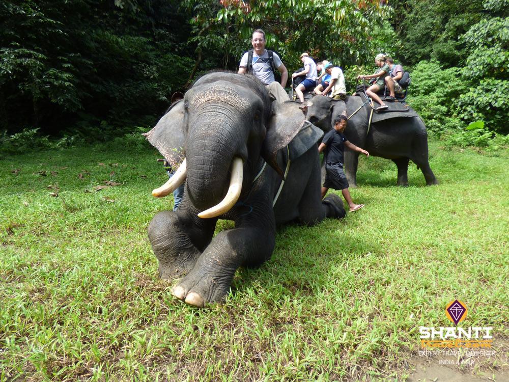 Balade à dos d'éléphant Tangkahan Sumatra
