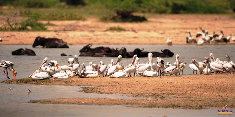 Bundala Wildlife Safari