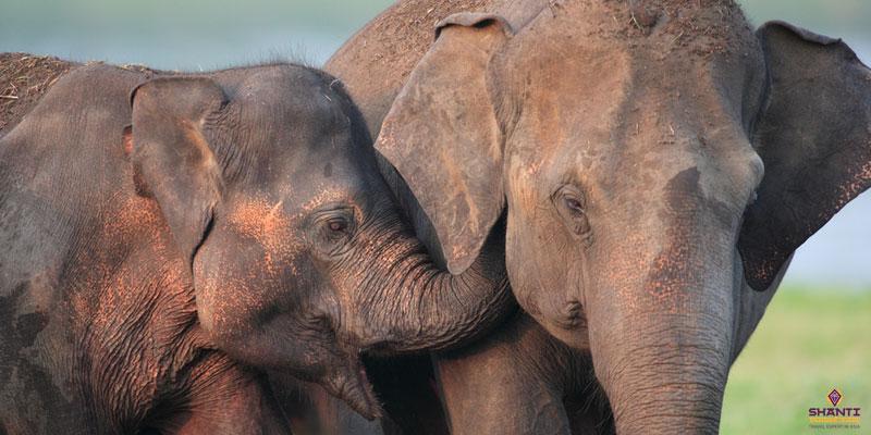 Elephant Safari in Wilipattu