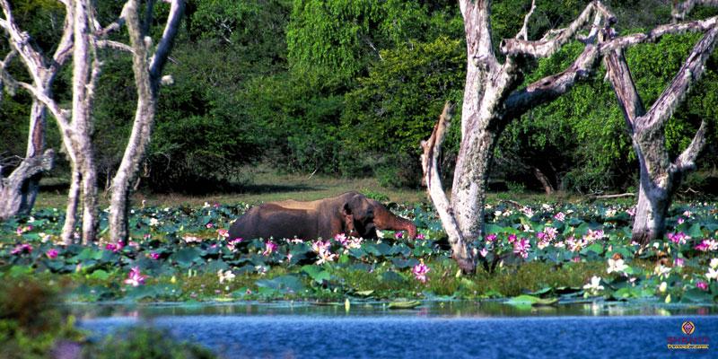 Jungle Safari in Sri Lanka