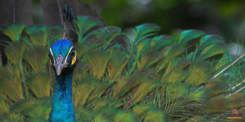 Sri Lanka Wildlife Safari