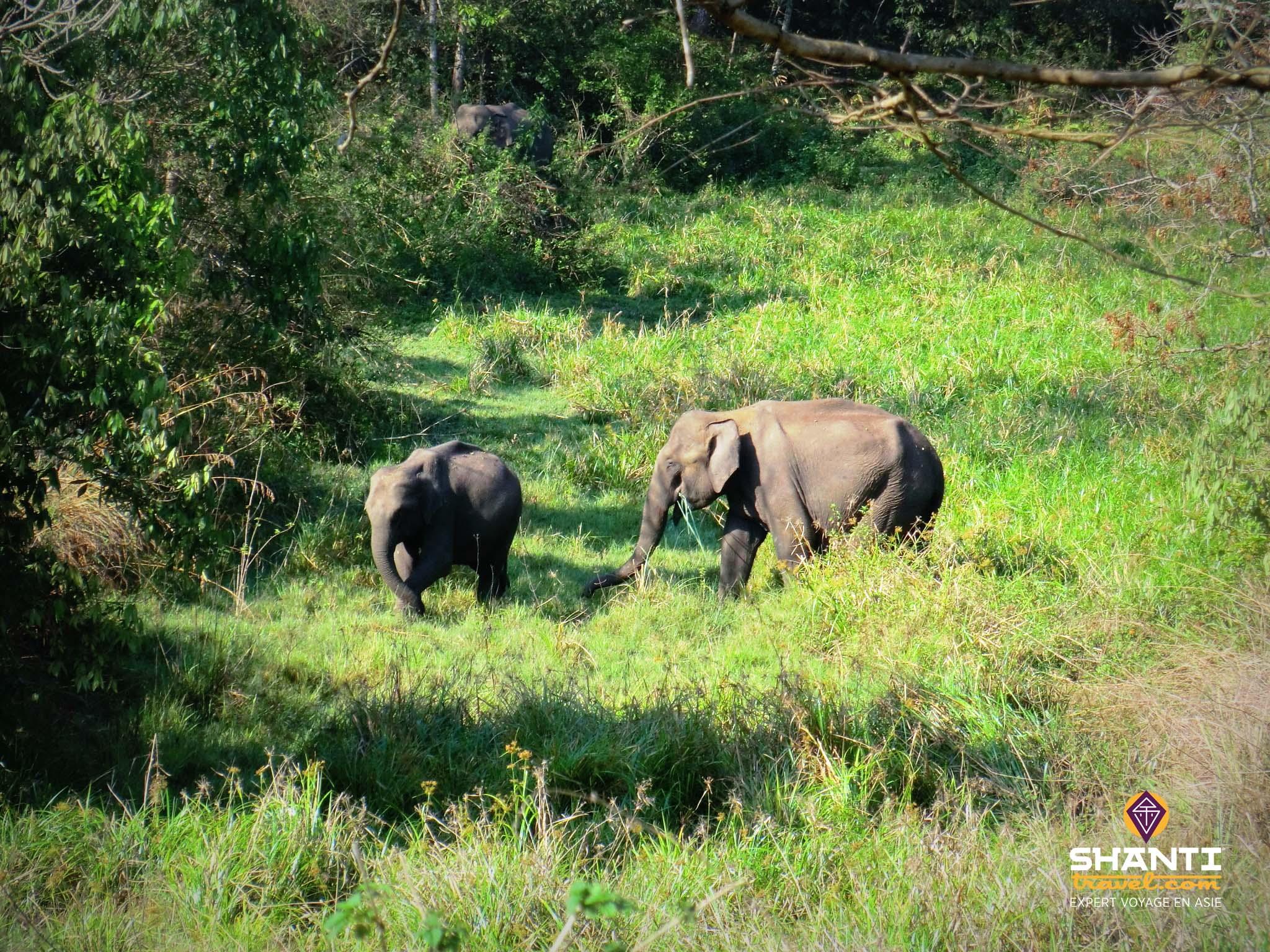 éléphant periyar