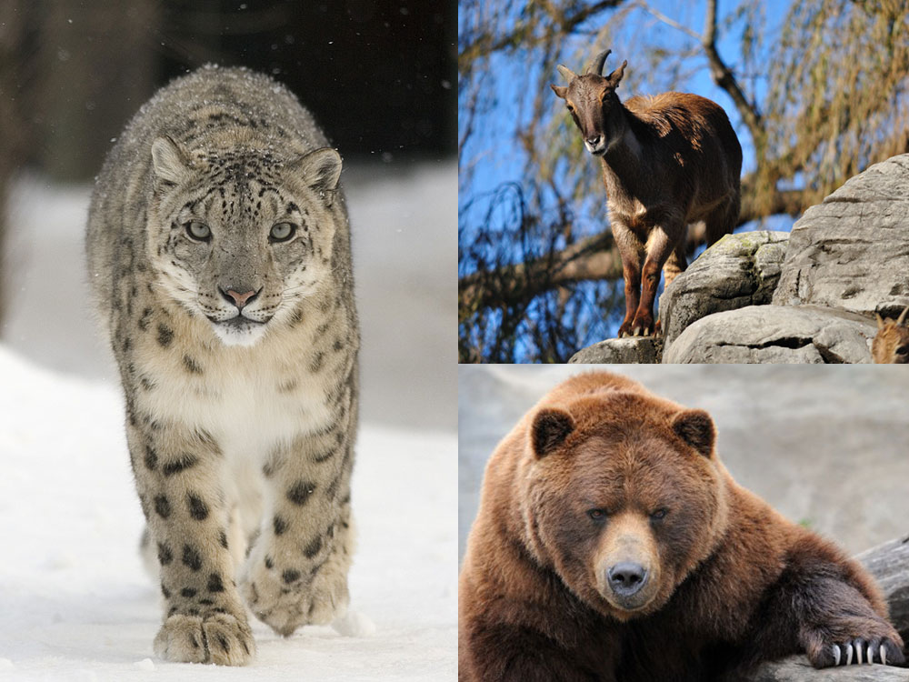 Animals in The Great Himalayan National Park