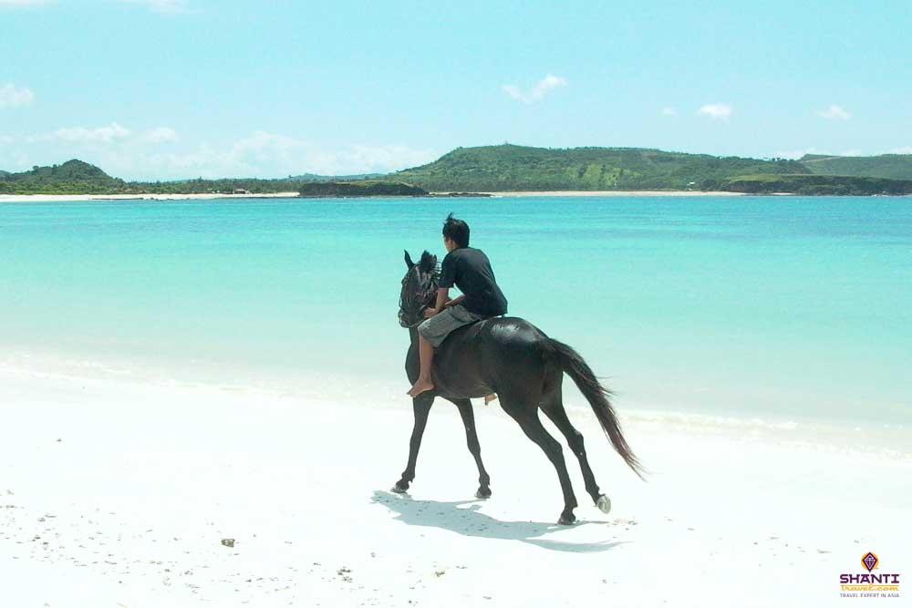 Lombok Horse riding tours