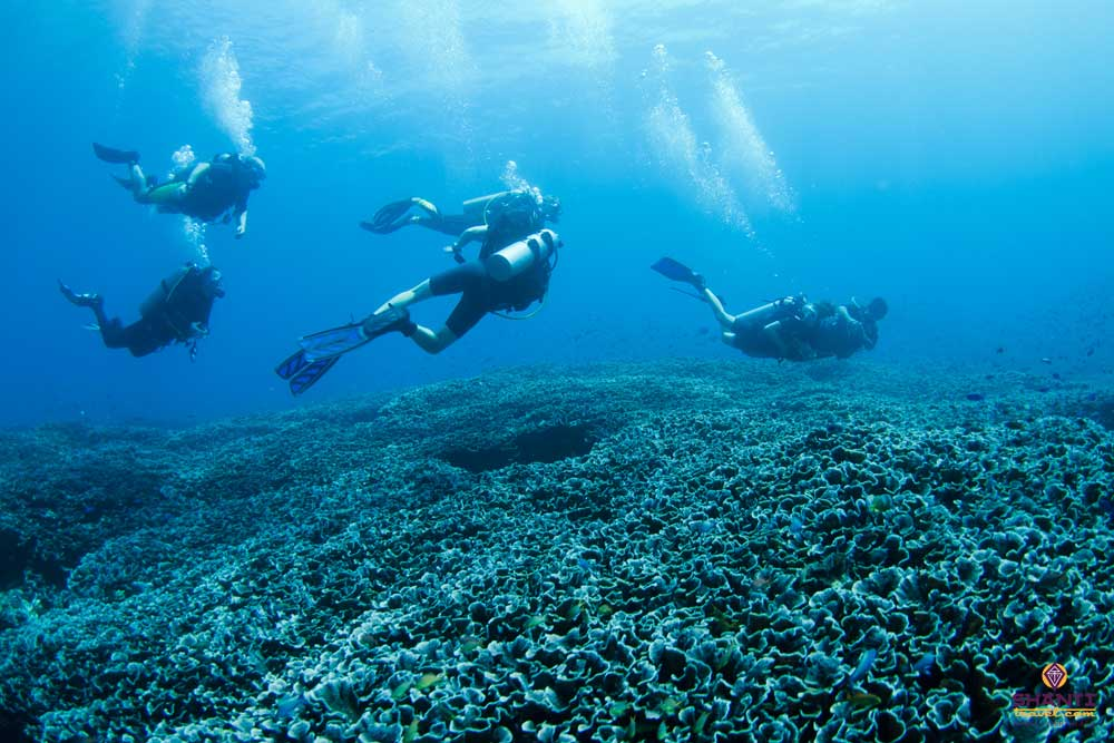 Indonesia best diving spots