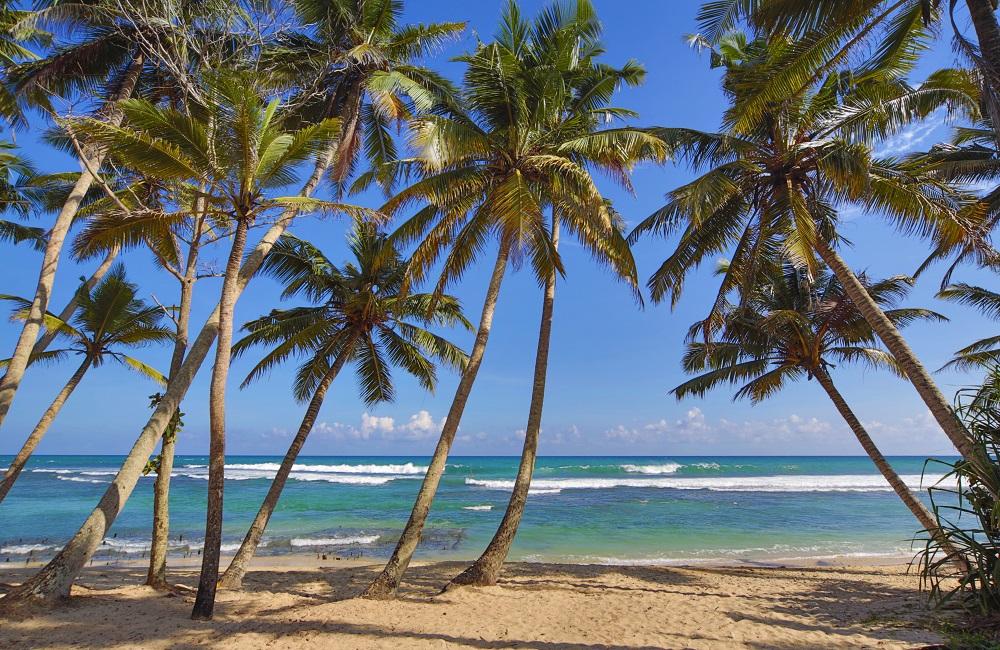 Plages paradisiaques du Sri Lanka