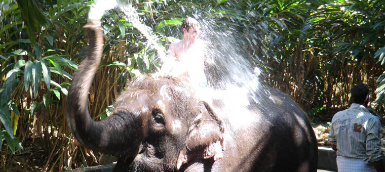 kerala douche sur un éléphant