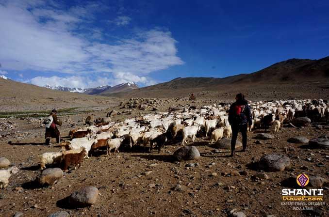 Changtang Ladakh