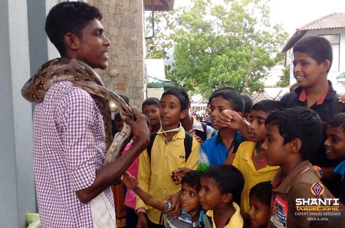 Serpents Sri Lanka