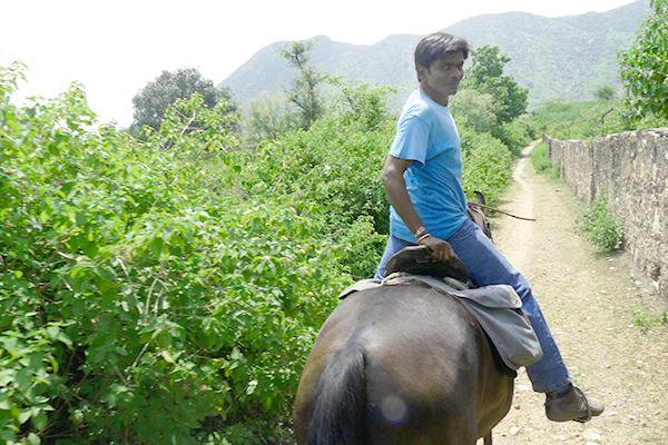 cheval udaipur