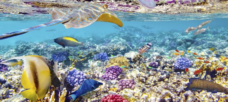 Philippines fonds marins