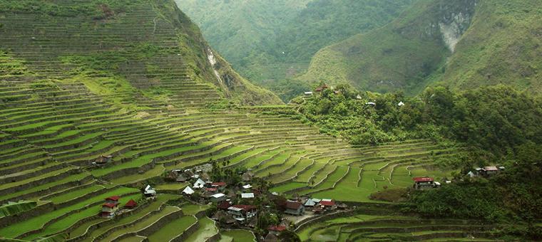 philippines rizieres