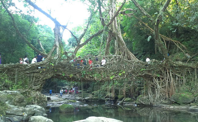 living-root-bridge-cherrapunji