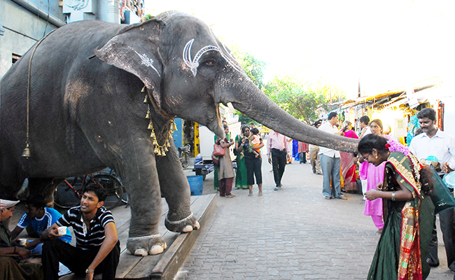 Tamil_Nadu_Pondicherry_Elephant_Blessing