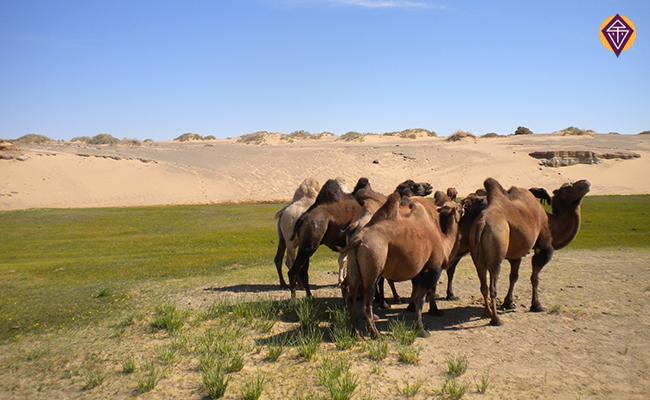 dunes khongor els